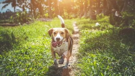 Mag je als huurder toch huisdieren houden ook al staat er een verbod in je huurcontract?